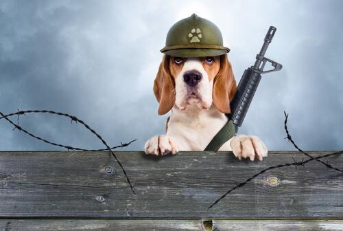 Nombres para perros de guarda