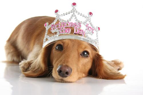 Nombres para perros de la realeza