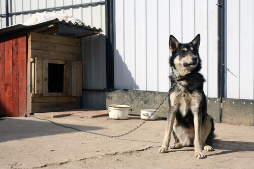 Nombres para perros guardianes