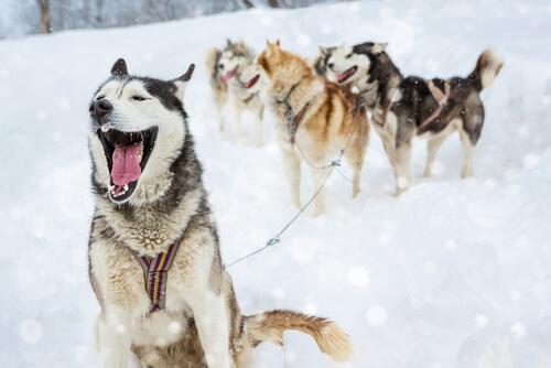 4 clases de nombres para perros macho