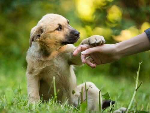 Obediencia en perros