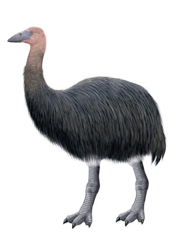 Pájaro elefante, un ave extinta de Madagascar