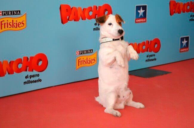 Homenaje a los perros más famosos del cine y la tele