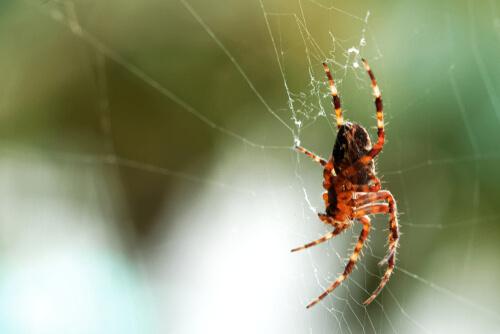 Papel de las arañas en el ecosistema