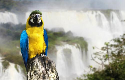 5 parques nacionales de Argentina