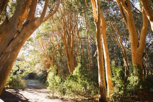 Parques nacionales de Argentina: parque nacional Los Arrayanes