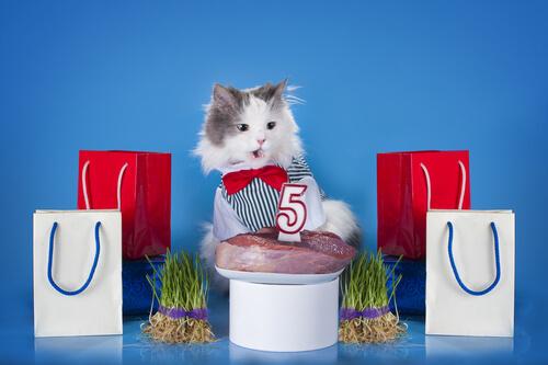 Un pastel de carne para tu gato