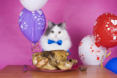 Pastel de pollo para tu gato