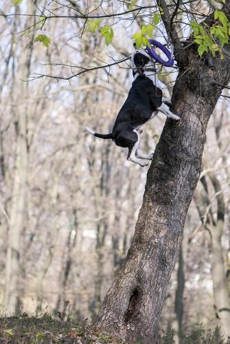 Perro escala árbol
