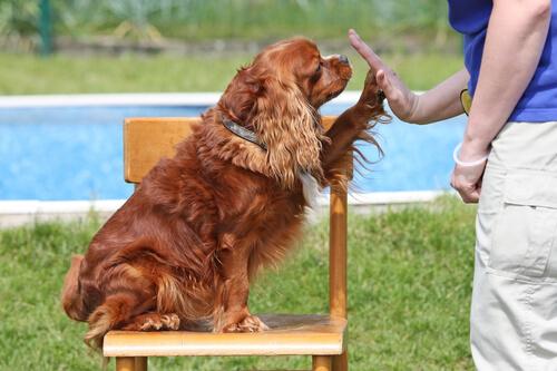 Perro y el mapeo