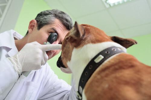 ¿Cómo puedes saber si tu perro no ve bien?