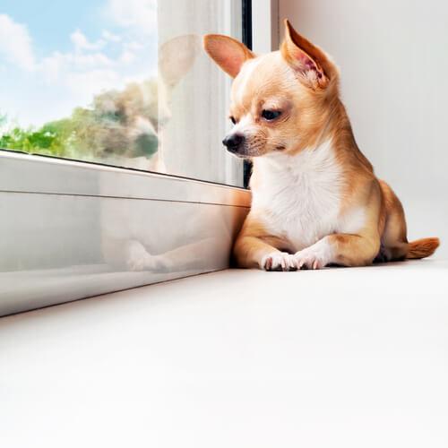 Consejos si tu perro pasa mucho tiempo solo