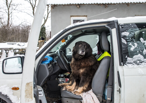 ¿Tu perro tiene miedo a los coches?