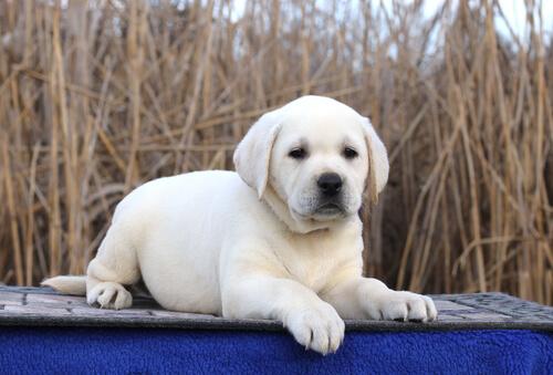 Perros más famosos del cine y la tele