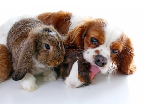 Perros y conejos pueden convivir juntos