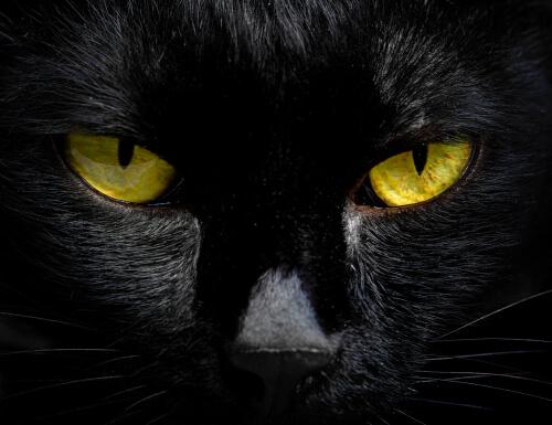 ¿Por qué brillan en la oscuridad los ojos de los gatos?