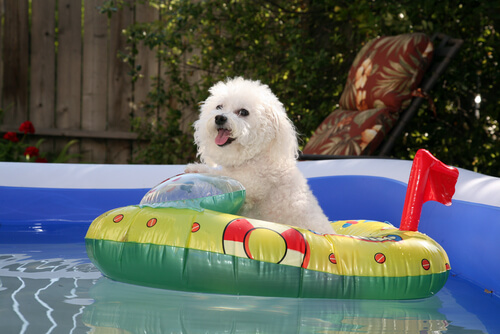 Prepara a tu perro para el verano