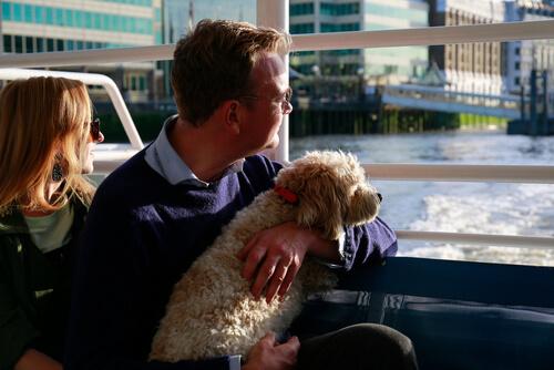 Pueden viajar perros en barco