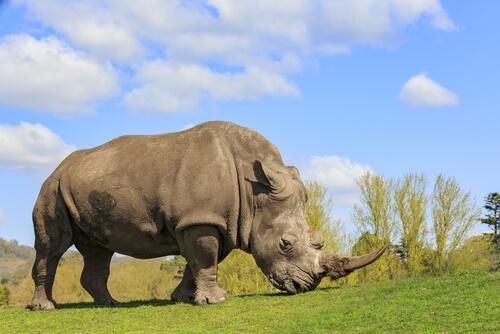 Las 5 especies de rinocerontes