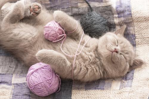 Ronroneo de los gatos: beneficios