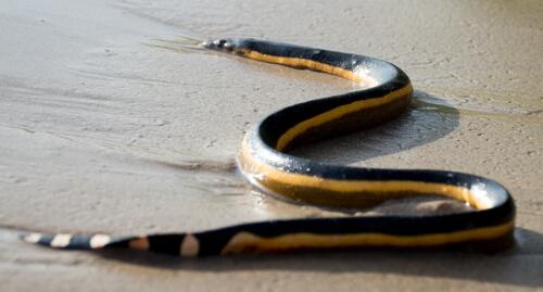 5 serpientes marinas