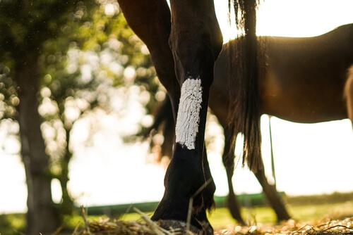 Signos clínicos de tétanos en caballos