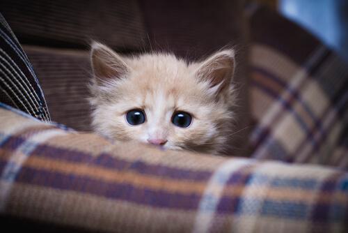 ¿Es necesario socializar a los gatos?