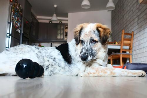Soledad en perros