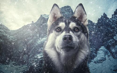 Taxonomía del perro doméstico