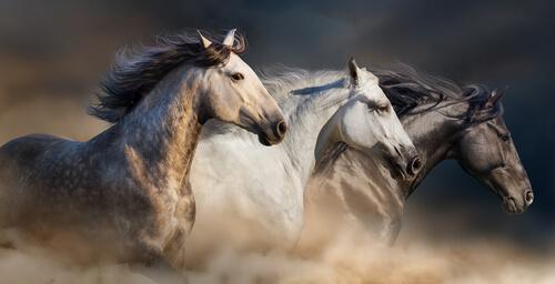 El tétanos en caballos