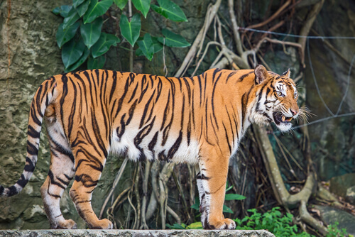 La fauna de Indochina