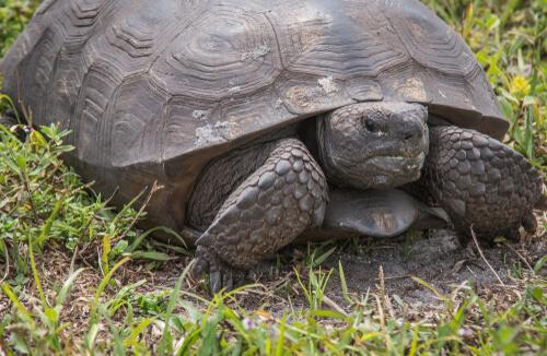 5 animales exóticos invasores en España