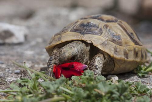 5 especies de tortugas de tierra