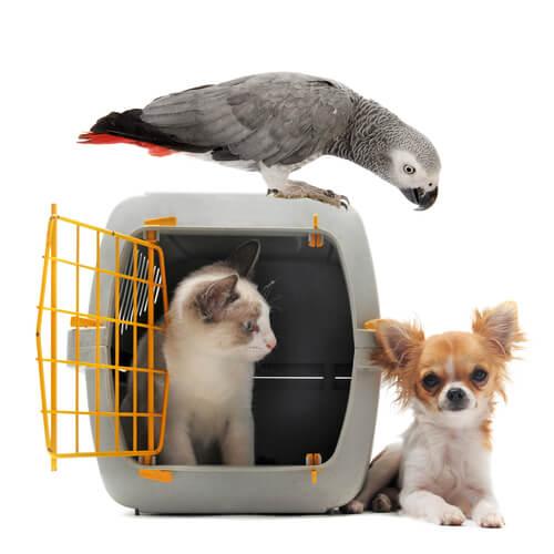 Transporte para aves