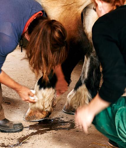 Vacuna de tétanos en caballos