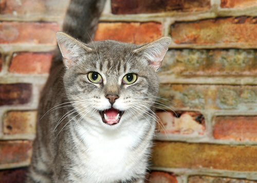 Actitudes extrañas de los gatos