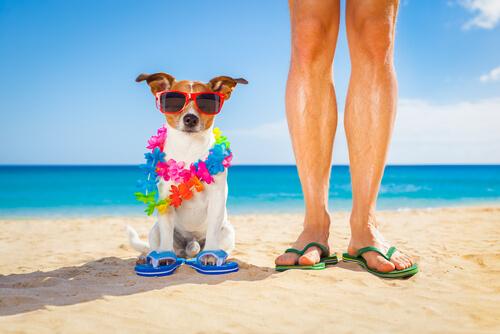 Actividades de verano con tu perro