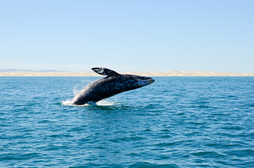 Se descubren ballenas extintas en costas españolas