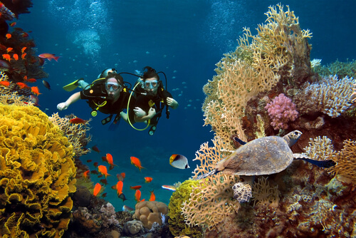 Dive among coral reefs in marine reserves.