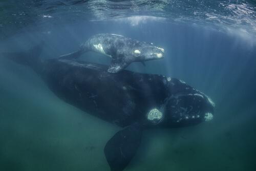 Caza de ballenas en País Vasco