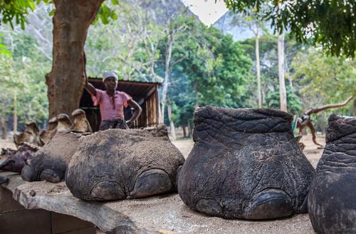 Caza de elefantes por marfil