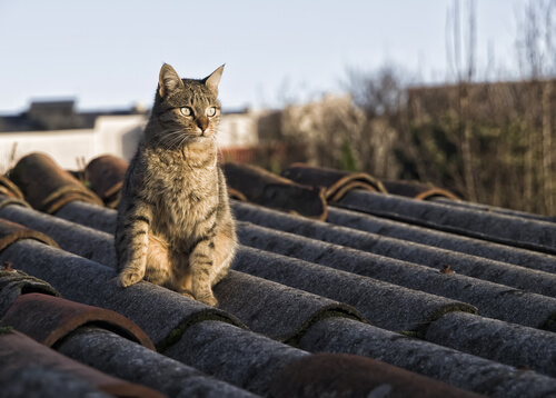 Cómo ahuyentar a los gatos de mi techo