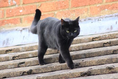 ¿Cómo espantar a un gato de tu tejado?