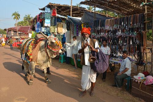 Cómo tratan a las vacas en la India
