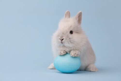 Conejo toy: cuidados