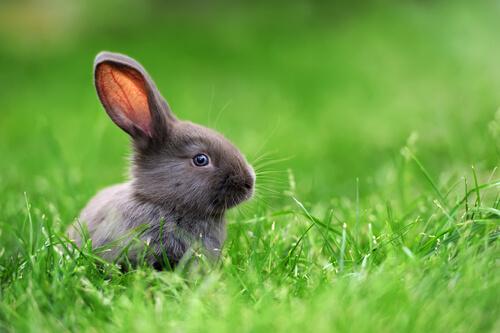 Conejo toy: personalidad