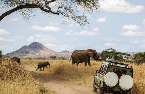 Consejos para hacer un safari