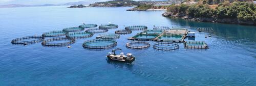 Cría de peces para consumo humano