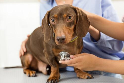 Consejos para cuidar bien de tus mascotas