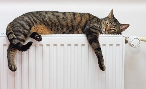 Diferencia entre felinos salvajes y gato doméstico